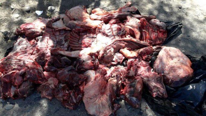 carne jabali