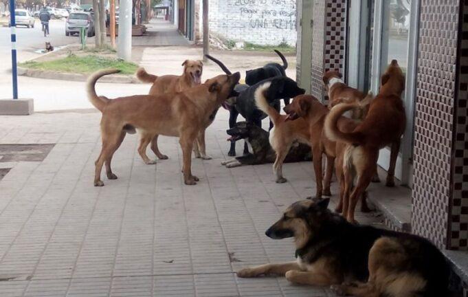 Perros Calle Catriel