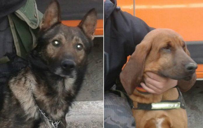 Catriel25Noticias.com canes-policia Canes de la policía de Río Negro claves para resolver una muerte en Santiago del Estero Destacadas NACIONALES NOTICIAS