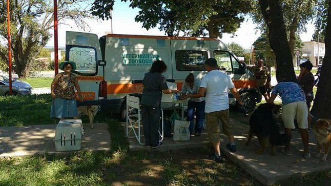 Catriel25Noticias.com perros-carlos-paz1-646x363 ¡Mirá cómo este municipio rescata los perros de la calle! NACIONALES NOTICIAS