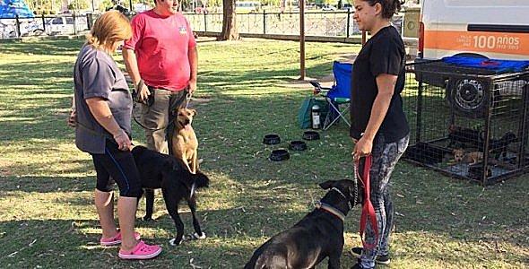 Catriel25Noticias.com perros-carlos-paz4 ¡Mirá cómo este municipio rescata los perros de la calle! NACIONALES NOTICIAS
