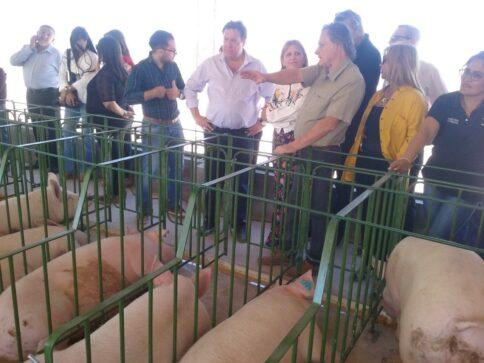 Catriel25Noticias.com were-granja-porcina-484x363 Catriel. Lo que dejó la visita del Gobernador Weretilneck Destacadas LOCALES NOTICIAS