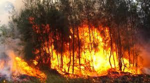 Catriel25Noticias.com incendios-forestales Río Negro: Resumen de noticias PROVINCIALES