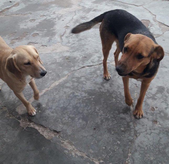 Perros Calle