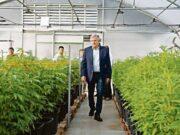 cannabis morales