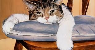 calor gato - Catriel25Noticias.com