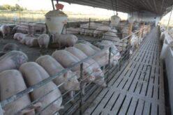 granja nueva - Catriel25Noticias.com