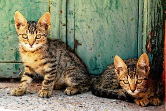 gatitos3 - Catriel25Noticias.com