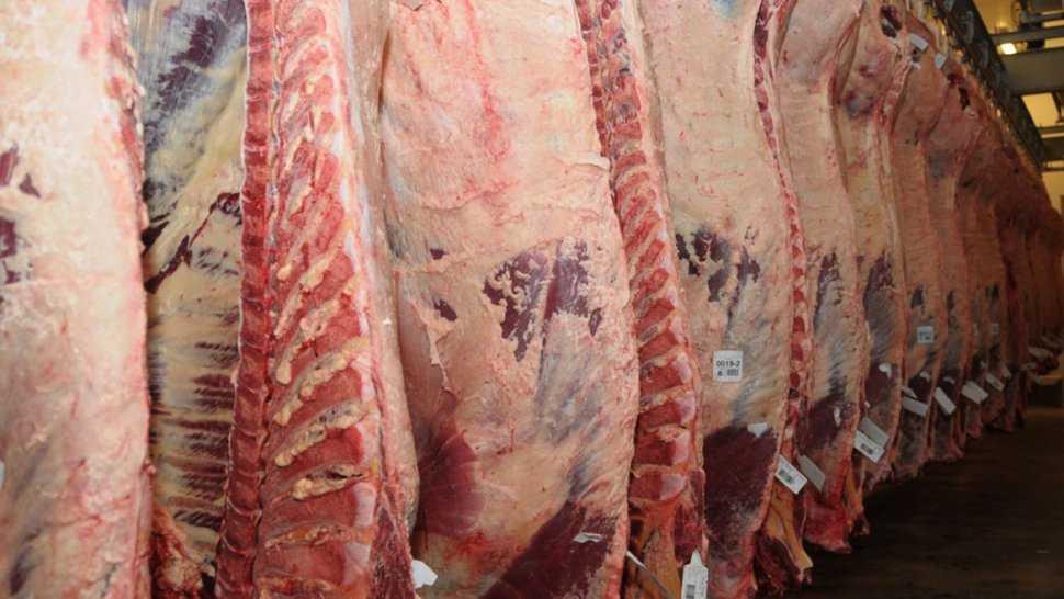 carne 3 - Catriel25Noticias.com