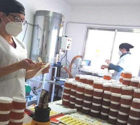 """""""Monte Austral"""": Miel de Catriel con proyección internacional"""